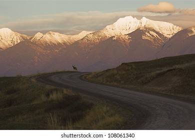 Gravel Road in the National Bison Range, Montana, featuring a Buck Deer, and the Mission Mountains
