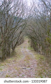 Gravel road in Ozark Mountains in mid winter.