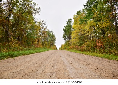 A gravel road through a forest