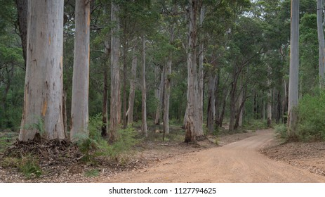 Gravel road through the forests of the Mount Frankland National Park, Western Australia