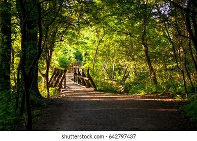 Gravel Road Through Green Forest in Austria