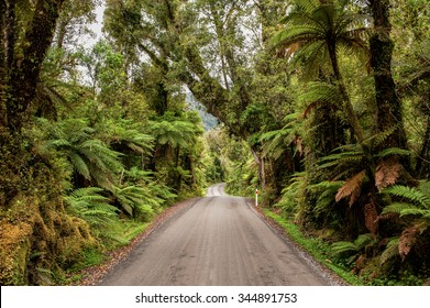 Gravel road through rainforest on the west coast of South Island, New Zealand