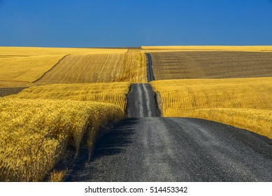 Gravel road through wheat fields in the Palouse of Washington State