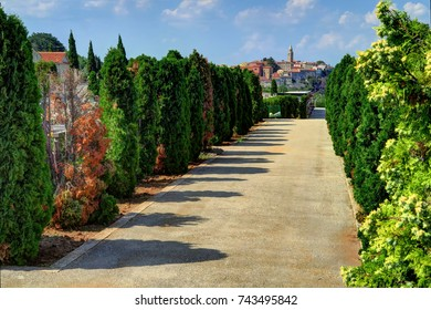 A gravel walkway is lined with trees in a cemetery, with Labin, Croatia, in the background