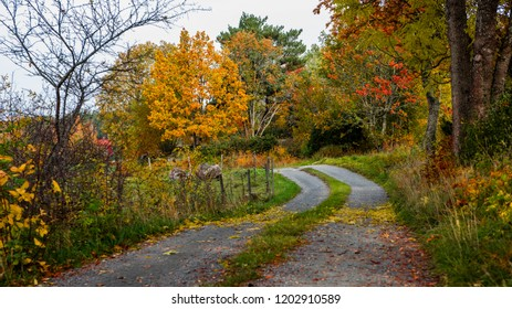 A gravelled road in autumn or a dirt road in fall with all the beautiful colors