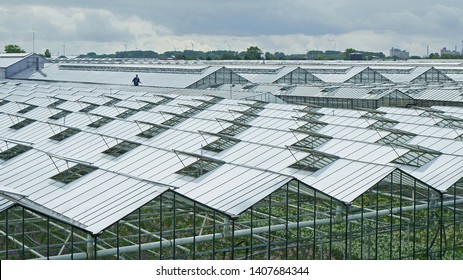 Gravenzande/The Netherlands - May 10th, 2019: Workman spraying white chalk on the greenhouse roofs as protection against excessive sunlight on the crop inside