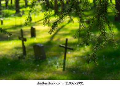 Graveyard nature/Fir trees branches foreground with crosses and head stones in the backdrop  in the Skogskyrkogarden cemetery in Stockholm.