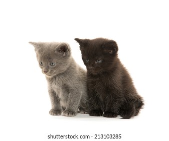 Gray and black cute baby kittens sitting on white background