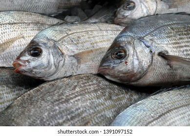 Gray bream close-up on the stall of a fishmonger