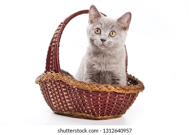 Gray British cat kitten in a basket (isolated on white)
