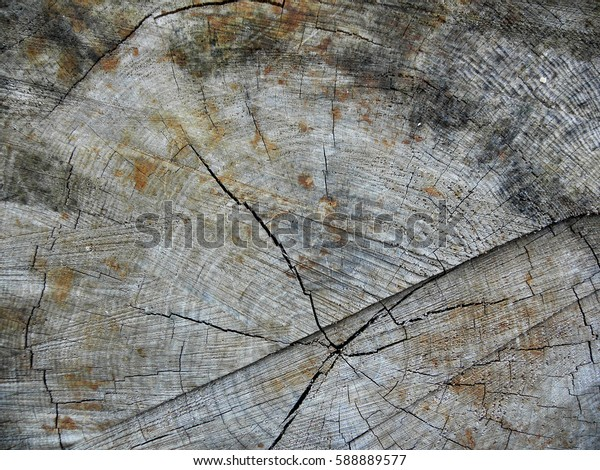 Gray and brown wood texture / Wood pattern
