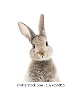 gray bunny on white background