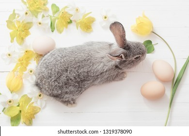 gray bunny with spring flowers on white wooden background