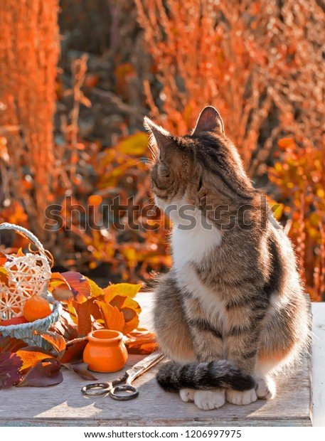 gray-cat-autumn-still-life-600w-12069979