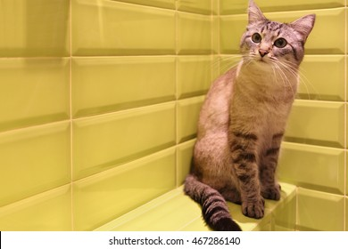 gray cat with black stripes sitting on ledge of wall in bathroom