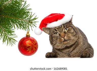 Gray cat with christmas cap and christmas balls.