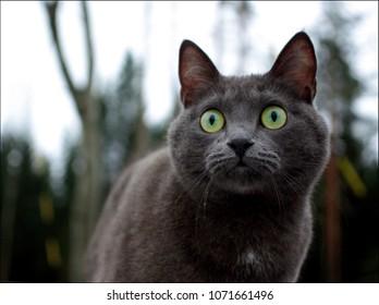 gray cat eyes wide open