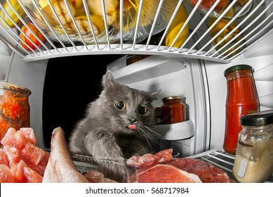 gray cat got into the fridge, sticking his tongue out and steals food