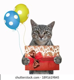 A gray cat holds a blue gift box and colored balloons. White background. Isolated.