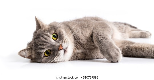 The gray cat lies on one side with open eyes. It is isolated on a white background, the small depth of sharpness, focus on a forepaw