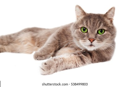 The gray cat lies on one side, a white background. It is isolated on white, the small depth of sharpness, selective focus