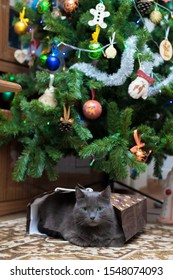 A gray cat lies under a Christmas tree in a gift bag.