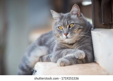gato gris en el jardín