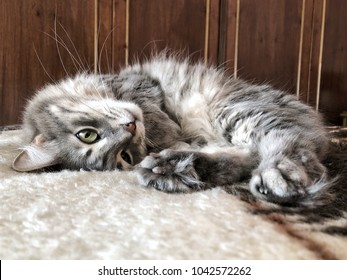 a gray cat lying on bed at home