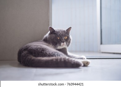 Gray cat lying on the floor