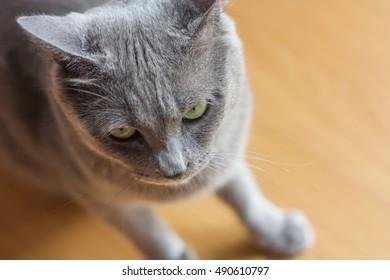 Gray cat in my room