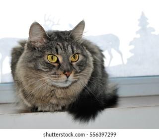 gray cat on a window sill