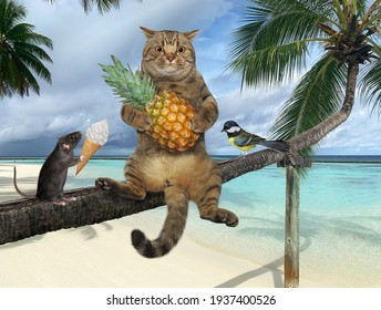 A gray cat with a pineapple is sitting on a fallen palm tree in a beach of Maldives over the sea water.