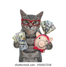 A gray cat in red glasses is holding a piggy bank and a fan of dollars. White background. Isolated.