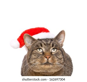 Gray cat with red Santa Claus hat .