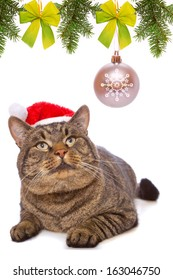 Gray cat with red Santa Claus hat and christmas decoration.