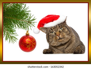 Gray cat with red Santa Claus hat.