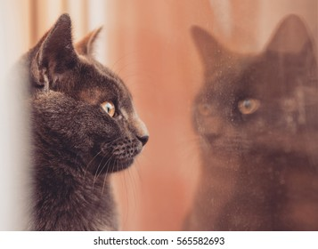 Gray cat sees his reflection in a dirty window.