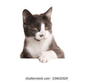 Gray Cat Serie, isolated on white