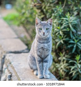 A gray cat sitting in a courtyard on a concrete fence.