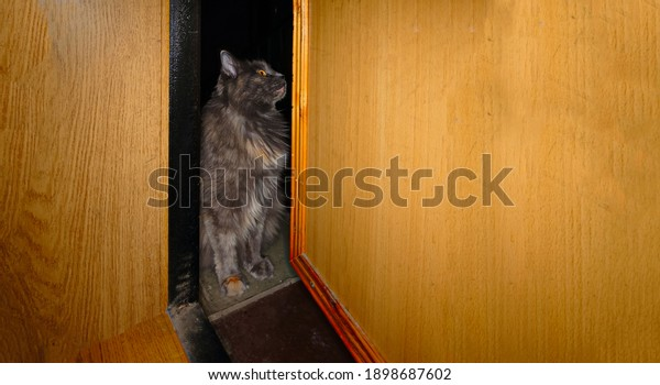 gray-cat-sitting-gap-open-600w-189868760
