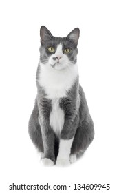 Gray Cat Sitting And Looking, white background