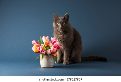 Gray Cat Sitting Next to Bouquet of Tulips