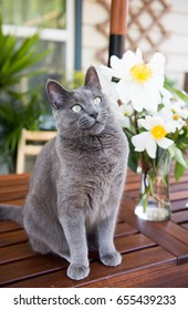 Gray Cat Sitting on Patio's Table Next to White Peonies