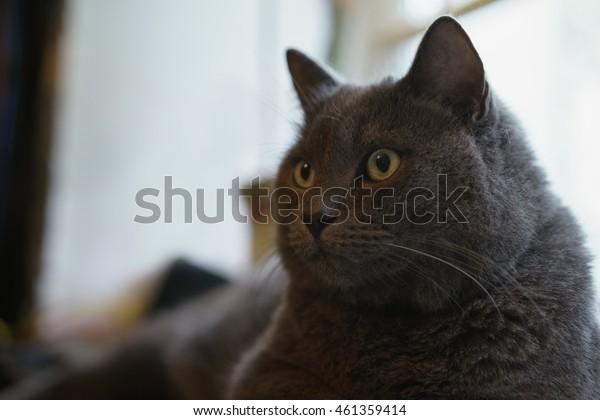 gray cat sitting on whe window
