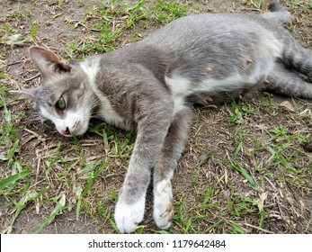 The gray cat sleeping on the ground, soft focus.