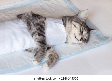 gray cat sleeping on the table on a diaper after operations on sterilization under a common narcosis