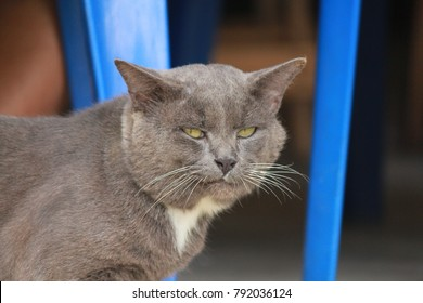 gray cat is standing staring.