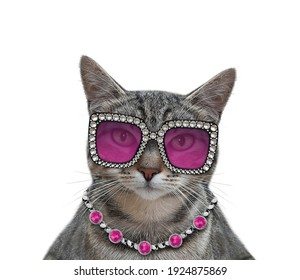 A gray cat wears stylish glasses and a necklace. White background. Isolated.