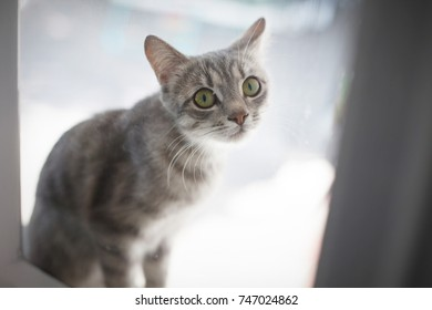 gray cat with yellow eyes sits outside