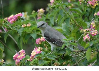 gray catbird perching on a tree branch